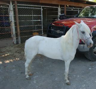 Ponys en renta para eventos infantiles