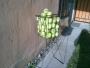 canasta de pelotas de tennis ideal para precticar 60 pelotas y canasta