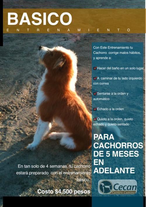 Centro de entrenamiento, estetica y pension de mascotas
