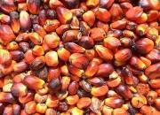 Para la venta, refinado y crudo: El aceite de palma, aceite de girasol, aceite de soja