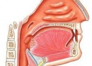 Medico cirujano otorrinolaringologo puerto escondido, oaxaca