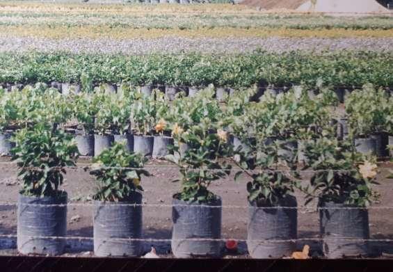 Fotos de Venta de articulos para decoracion de su jardin 1