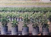 venta de articulos para decoracion de su jardin