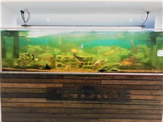 Fotos de Traspaso restaurante polanco cdmx, gran ubicacion, en funciones, espectacular re 13
